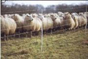 Sheep & Goat Kits