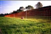 Rabbit / Badger Netting
