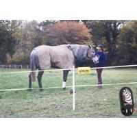 Horse Kits