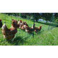 The Professional Fox Busting Poultry Netting