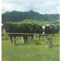 Cattle Kits